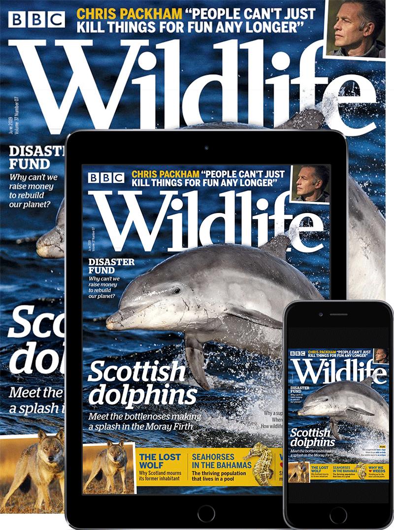BBC Wildlife Print & Digital Magazine Subscription