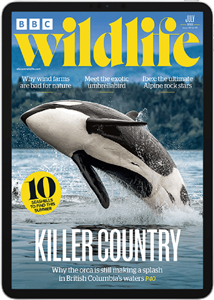 BBC Wildlife Digital Subscription