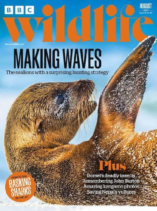 wildlife magazine cover