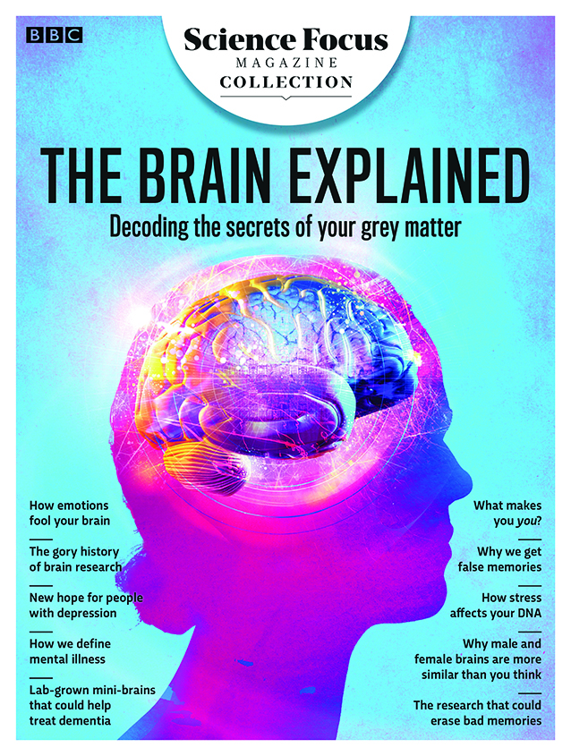 The Brain Explained